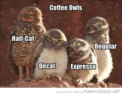 coffee owls birds animals caffeine funny pics pictures pic picture image photo images photos lol