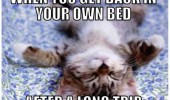 cute kitten cat sleeping back in own bed long trip animal lolcat funny pics pictures pic picture image photo images photos lol