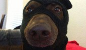 dog animal balaclava give me treats nobody gets hurt funny pics pictures pic picture image photo images photos lol