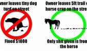 dog horse pooping street shit fine funny pics pictures pic picture image photo images photos lol