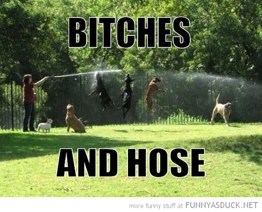 dogs jumping water animals garden bitches and hose hose funny pics pictures pic picture image photo images photos lol