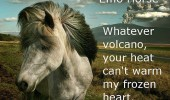 emo horse animal whatever volcano warm my frozen heart funny pics pictures pic picture image photo images photos lol