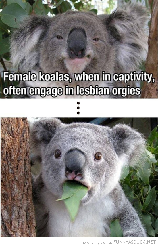 female koalas lesbian orgys animals captivity funny pics pictures pic picture image photo images photos lol