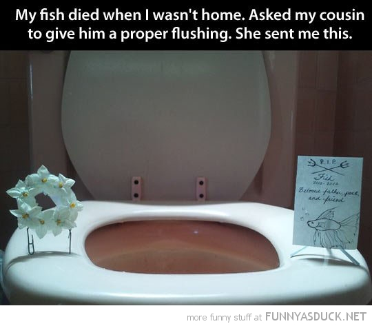 fish funeral proper flushing toilet funny pics pictures pic picture image photo images photos lol