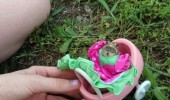 frog dress animal toy pram kill me funny pics pictures pic picture image photo images photos lol