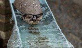 hipster otter animal river too mainstream funny pics pictures pic picture image photo images photos lol