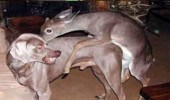 honey home deer animal sex dog caught cheating funny pics pictures pic picture image photo images photos lol