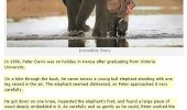 incredible story elephant funny pics pictures pic picture image photo images photos lol