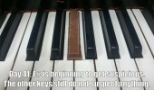 kit kat piano key getting suspicious funny pics pictures pic picture image photo images photos lol