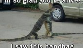 lizards animals hugging saw hand bag got worried funny pics pictures pic picture image photo images photos lol