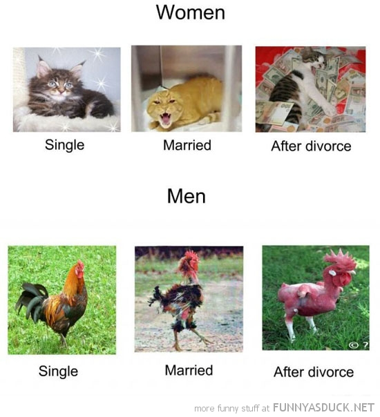 men woman before after married chicken cat animal funny pics pictures pic picture image photo images photos lol