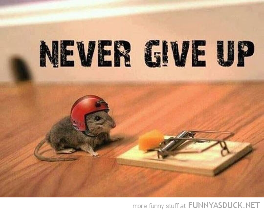 mouse animal trap cheese helmet never give up funny pics pictures pic picture image photo images photos lol