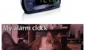 normal peoples alarm clock my cats lolcats animals staring funny pics pictures pic picture image photo images photos lol