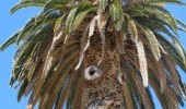 palm tree shocked fave seen some shit funny pics pictures pic picture image photo images photos lol