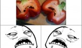 pepper face vegetable sweet jesus meme rage comic funny pics pictures pic picture image photo images photos lol