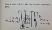 plant cell school home work drawing flower jail prison funny pics pictures pic picture image photo images photos lol