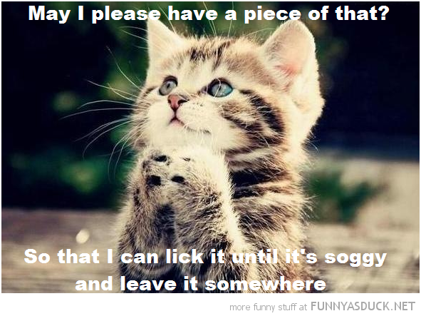 begging cat lolcat animal please have piece lick it leave it soggy funny pics pictures pic picture image photo images photos lol