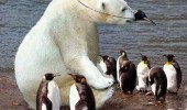 polar bear animal penguin mask costume they suspect nothing funny pics pictures pic picture image photo images photos lol
