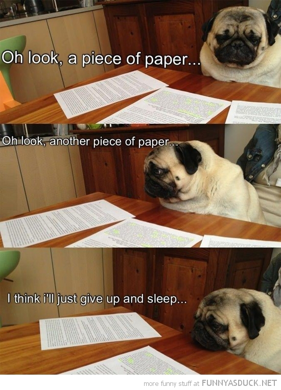 pug dog animal studying piece of paper sleep table funny pics pictures pic picture image photo images photos lol