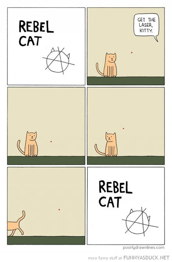 rebel cat lolcat comic red dot funny pics pictures pic picture image photo images photos lol