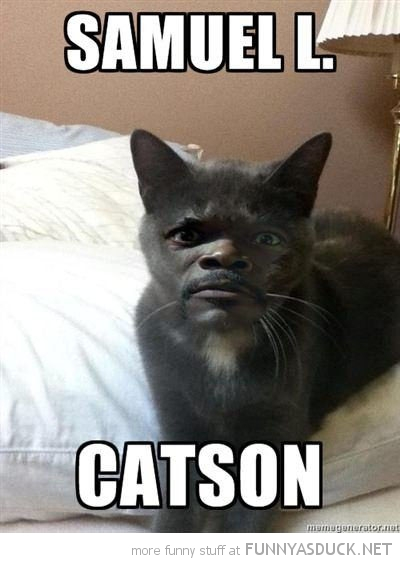 samuel l catson jackson cat lolcat animal funny pics pictures pic picture image photo images photos lol