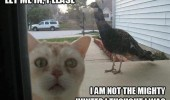 scared cat lolcat animal door peacock let me in not mighty hunter funny pics pictures pic picture image photo images photos lol