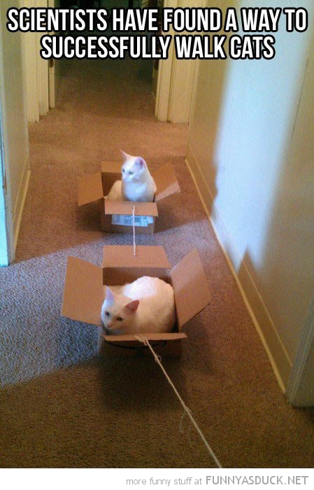 scientists found way walk cats lolcats animals cardboard boxes funny pics pictures pic picture image photo images photos lol