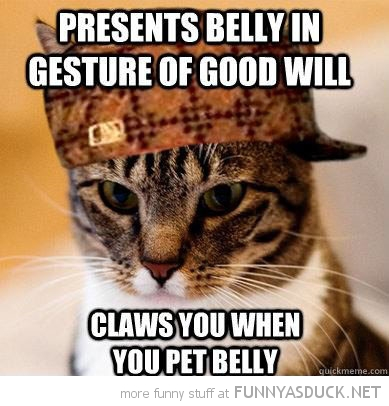 scumbag cat presents belly claws you animal lolcat funny pics pictures pic picture image photo images photos lol