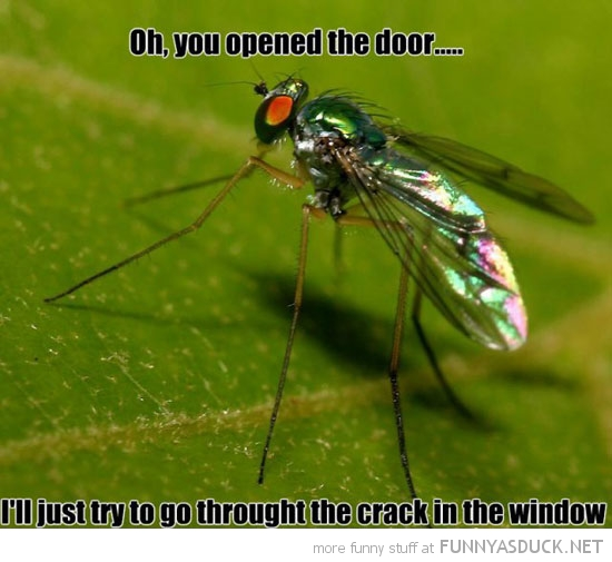 scumbag fly opened door crack window insect animal funny pics pictures pic picture image photo images photos lol