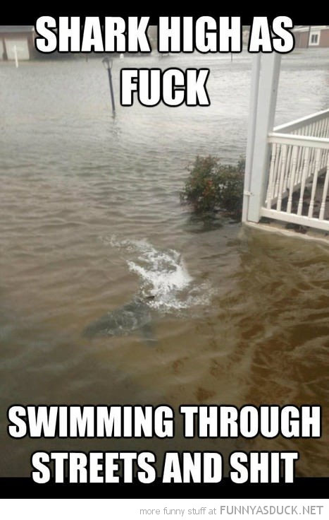 shark high as fuck swimming street animal funny pics pictures pic picture image photo images photos lol