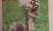 squirrel animal halloween mask head terrified neighborhood funny pics pictures pic picture image photo images photos lol