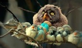 stressed bird owl animal chicks nest use condom funny pics pictures pic picture image photo images photos lol