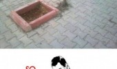 tree missed hole sidewalk pavement so close meme funny pics pictures pic picture image photo images photos lol