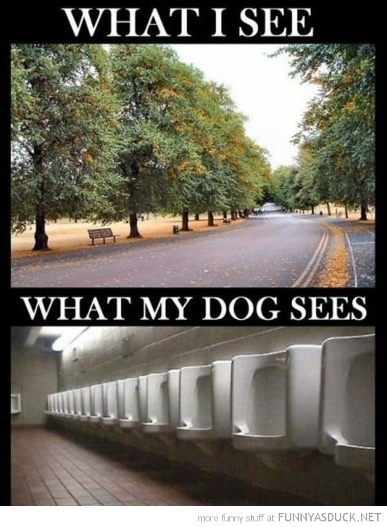 trees what my dog sees toilets urinals funny pics pictures pic picture image photo images photos lol