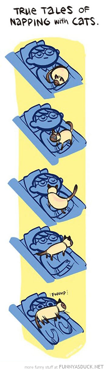 true tales napping cats comic funny pics pictures pic picture image photo images photos lol