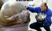 walrus birthday animal fish cake for me funny pics pictures pic picture image photo images photos lol