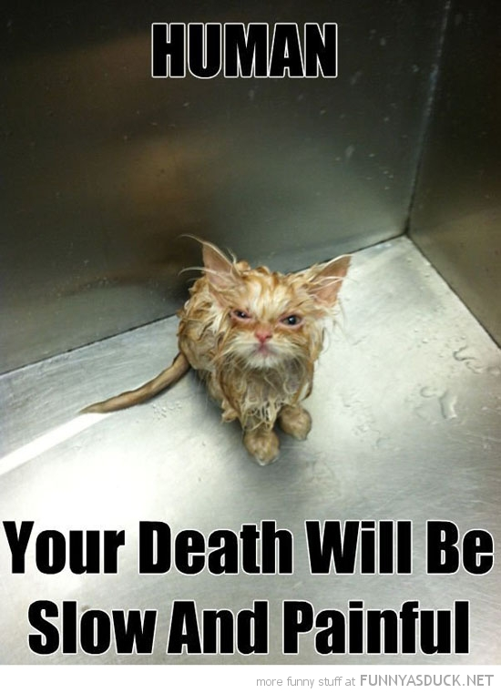 wet pussy cat lolcat animal bath your death will be slow painful funny pics pictures pic picture image photo images photos lol