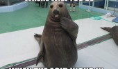 wide eyed walrus animal acid kicks in  funny pics pictures pic picture image photo images photos lol