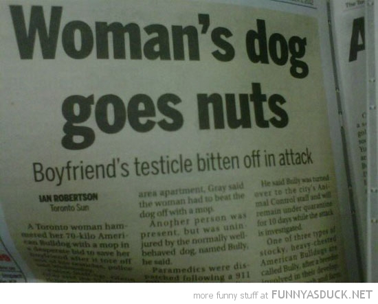 woman's dog goes nuts bites testicle news report funny pics pictures pic picture image photo images photos lol