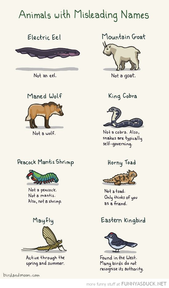 animals with misleading names comic funny pics pictures pic picture image photo images photos lol