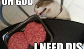 cat lolcat animal burgers i need dis funny pics pictures pic picture image photo images photos lol