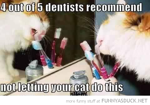 cat lolcat animal licking toothbrush dentists recommend funny pics pictures pic picture image photo images photos lol