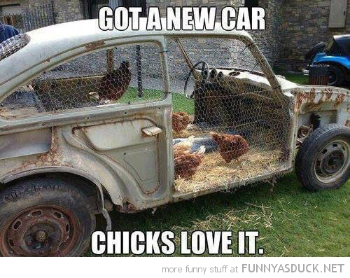 chick magnet birds animals hen house car funny pics pictures pic picture image photo images photos lol