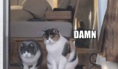 did you see that ass damn cats animals door window funny pics pictures pic picture image photo images photos lol