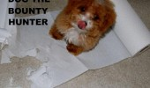 dog bounty hunter animal kitchen roll towel funny pics pictures pic picture image photo images photos lol