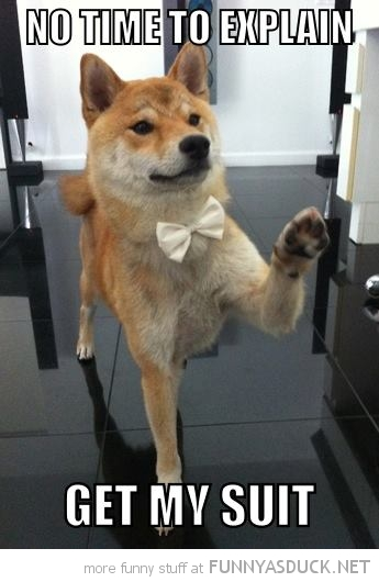dog animal bow tie no time to explain get suit funny pics pictures pic picture image photo images photos lol