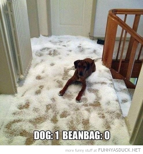 Never Trust A Dog Around A Beanbag