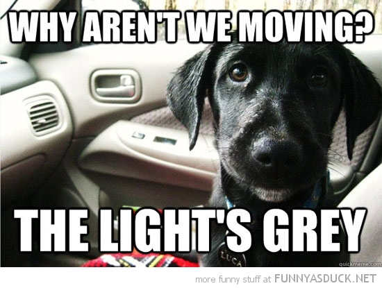 dog animal car why not moving light grey funny pics pictures pic picture image photo images photos lol