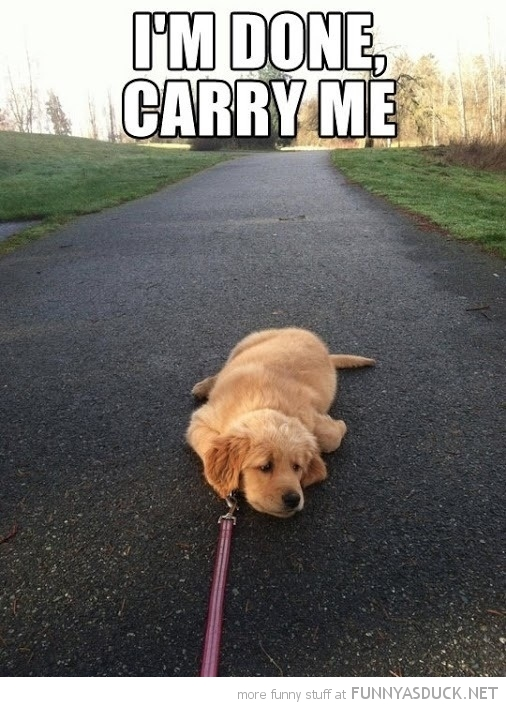 dog lying down path animal leash tired carry me funny pics pictures pic picture image photo images photos lol