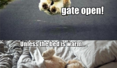 dog animal philosophy live like someone left gate open funny pics pictures pic picture image photo images photos lol